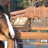 Pferde der Ranch - Reinert Ranch