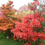 Rhododendrongarten am Schloss  - Ferienwohnung Paul in Königshain